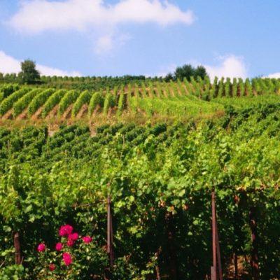 vignoble des vins de Bordeaux