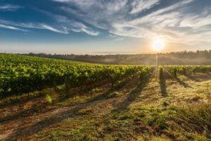 vigne de la visite de l'école du vin