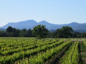 vignes en Terrasses du Larzac